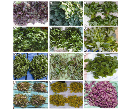 The leafy vegetable species of Jharkhand are an effective source of nutrition