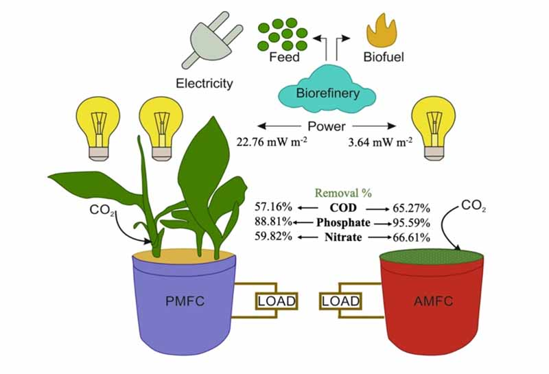 'Plant-based microbial fuel cell more capable of generating energy from wastewater': Study